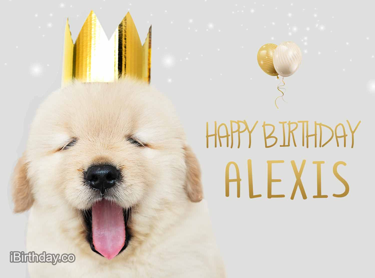 Alexis Dog with Crown Birthday Wish