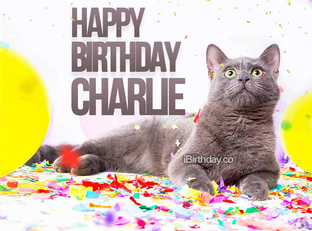 Charlie Cat Birthday Meme