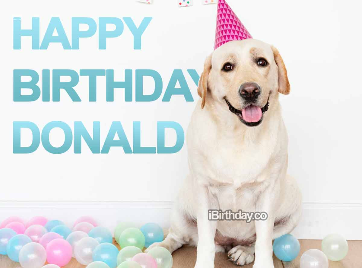 Donald Dog Birthday Wish