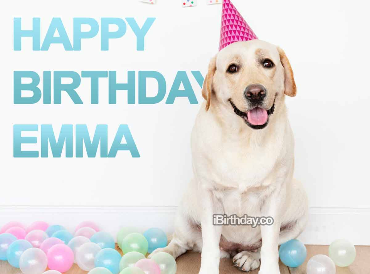 Emma Birthday Dog Meme