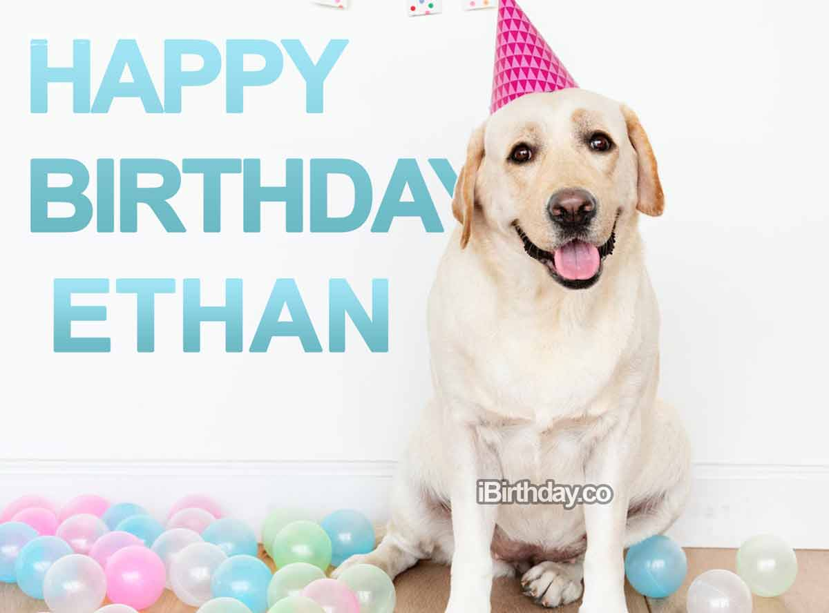 Ethan Dog Happy Birthday
