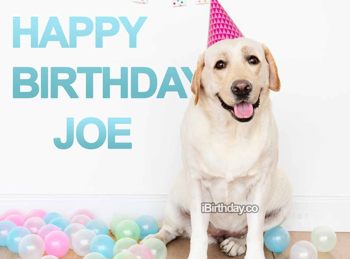 Joe Dog and Balloons Birthday Wish
