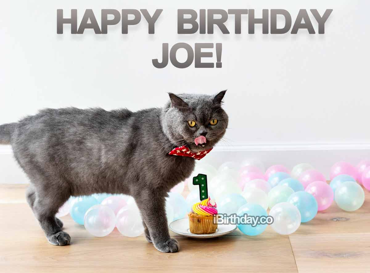 Joe Funny Cat Birthday Meme