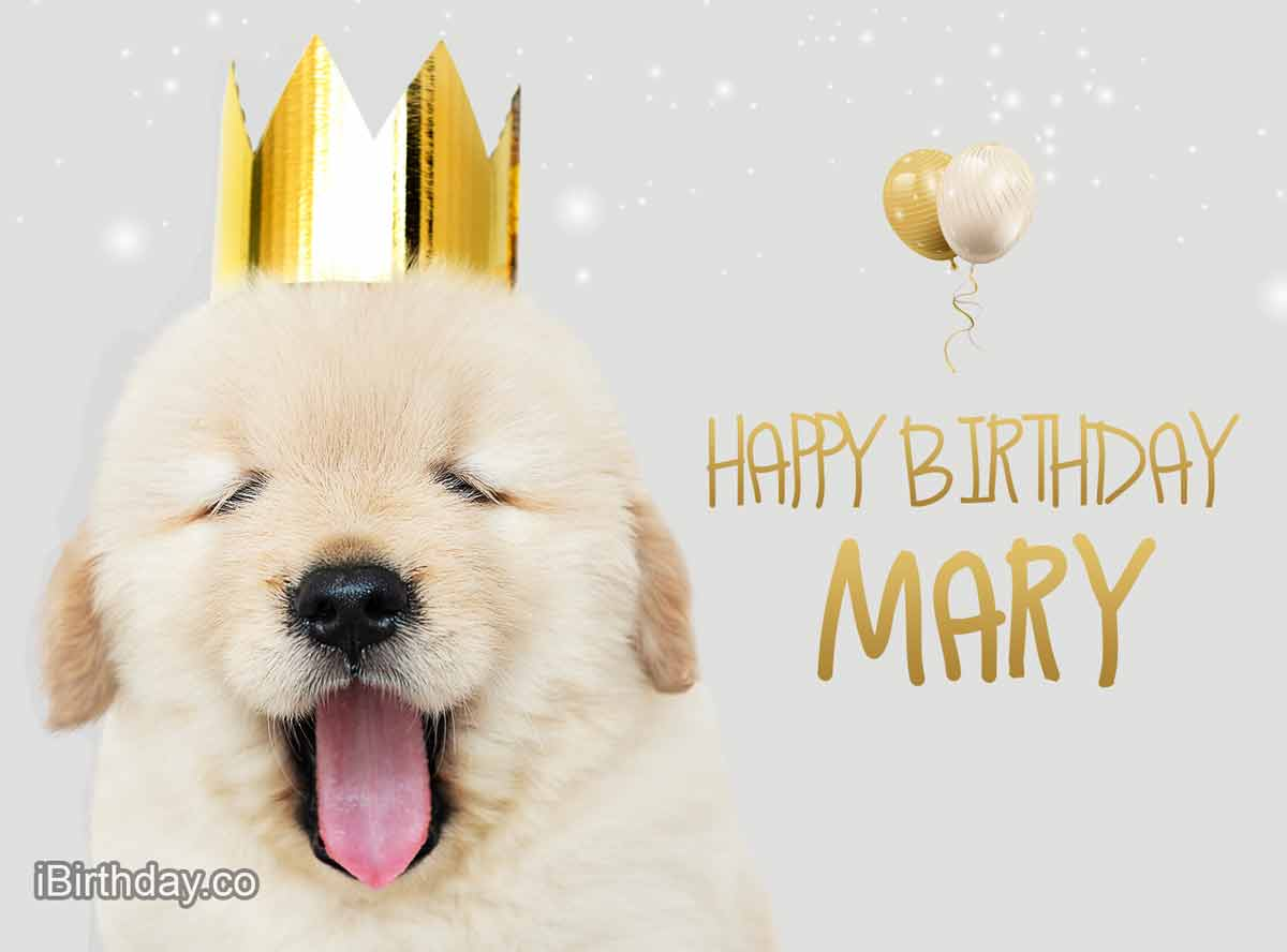 Mary Happy Birthday Dog