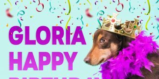 Gloria Dog With Crown Birthday Meme