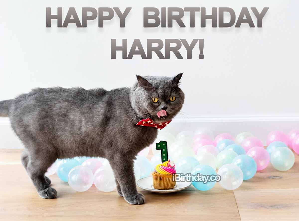 Harry Crazy Cat Birthday Meme