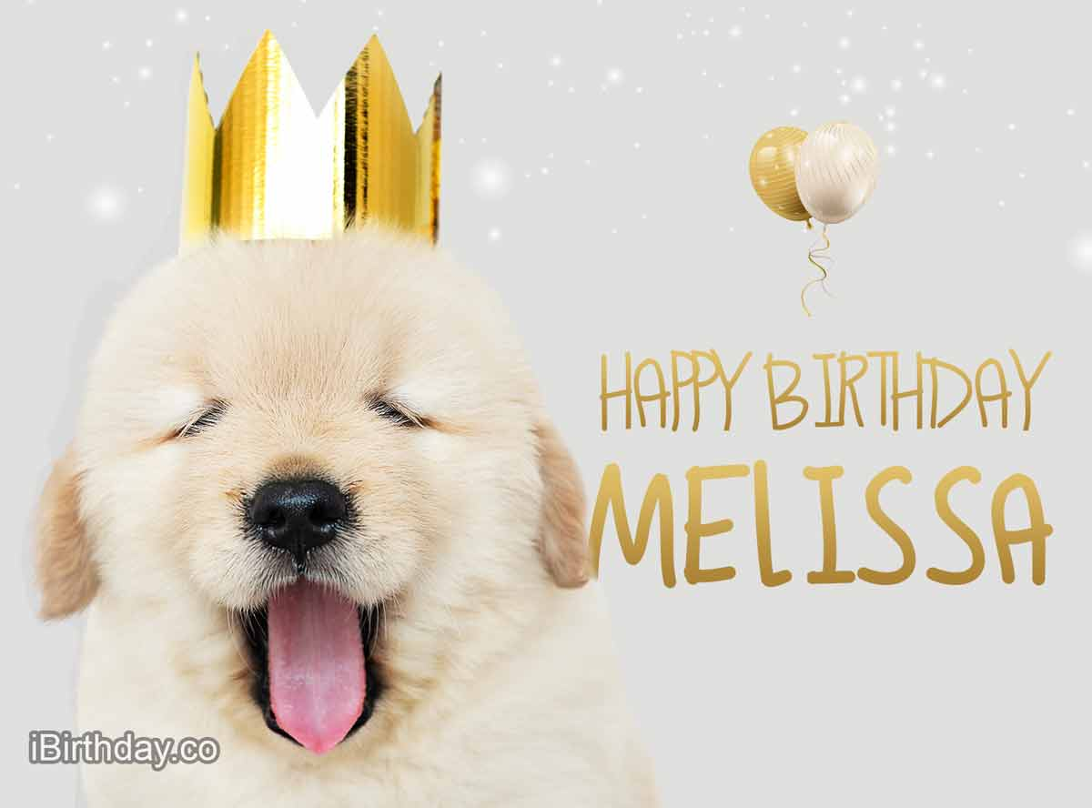 Melissa Dog Birthday Meme