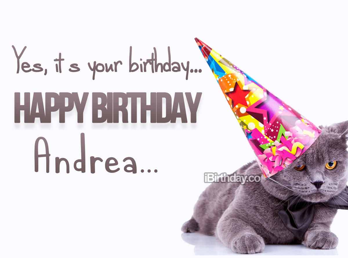 Andrea Cat Birthday Meme