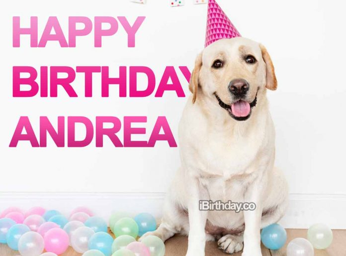 Andrea Dog Happy Birthday