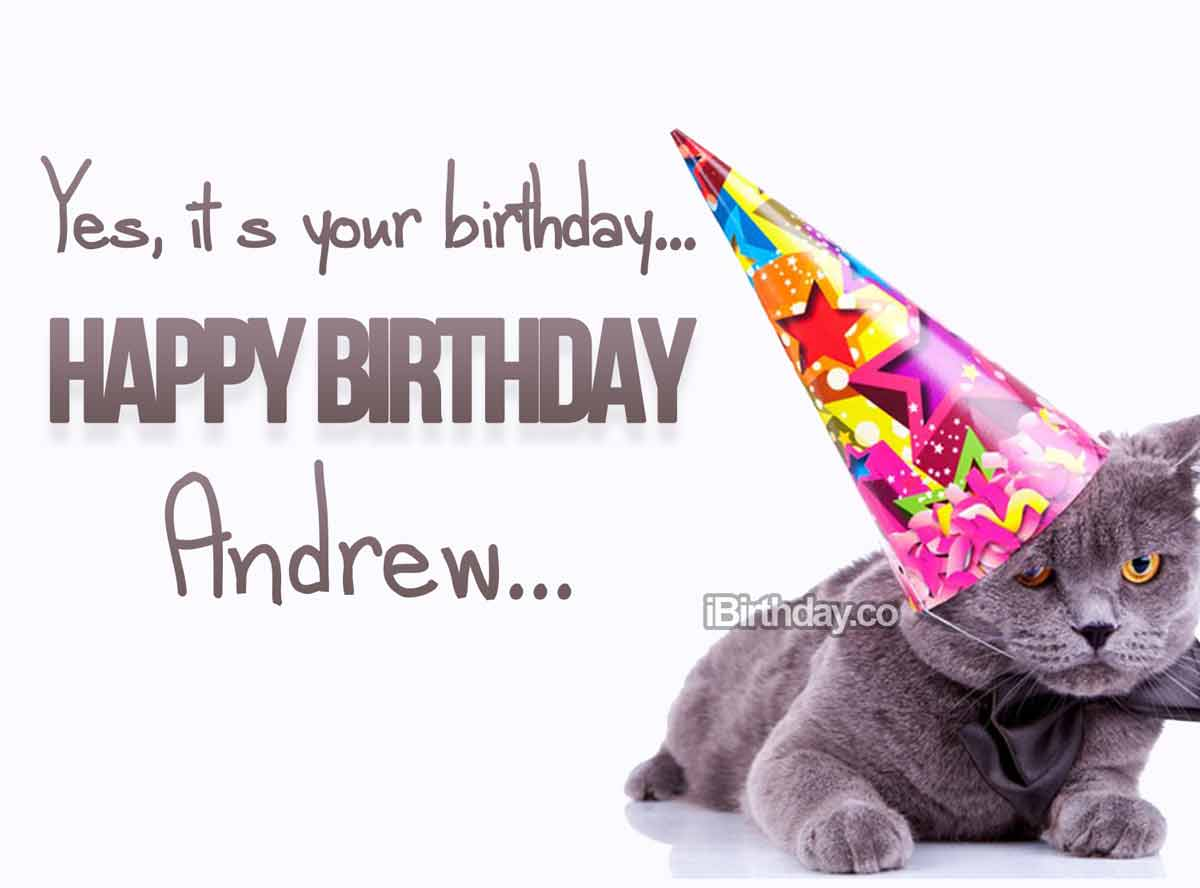 Andrew Cat Birthday Wish