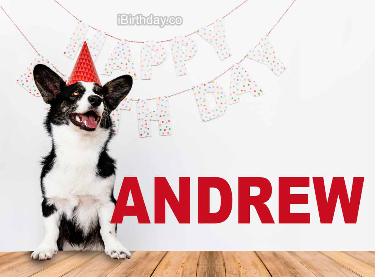 Andrew Dog Happy Birthday Wish