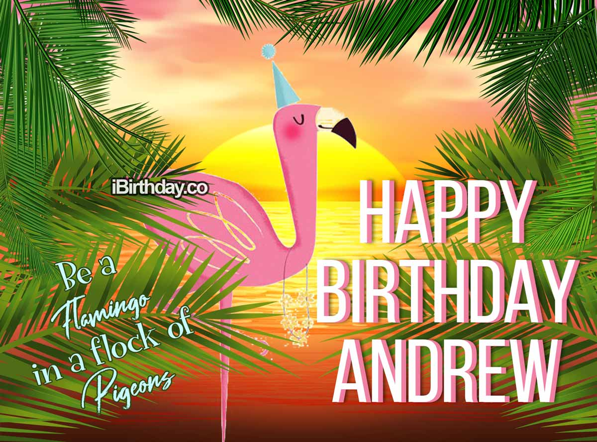 Andrew Flamingo Birthday Meme