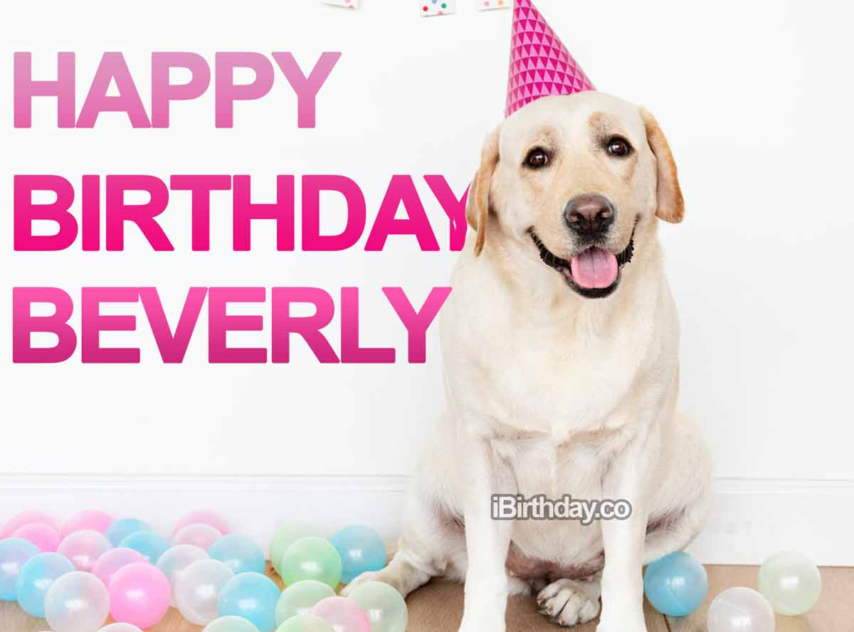 Beverly Dog Birthday Meme
