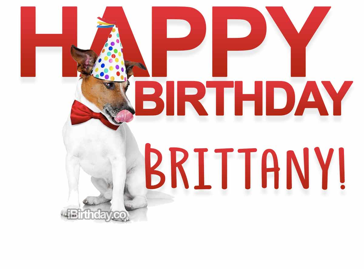 Brittany Dog Happy Birthday