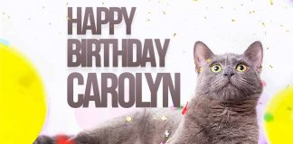 Carolyn Cat Birthday Meme