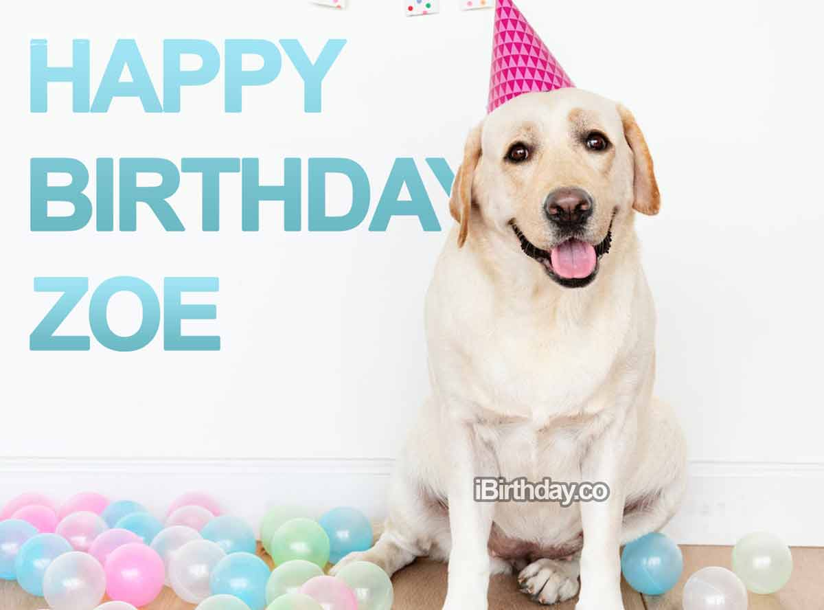Dog Birthday Wish