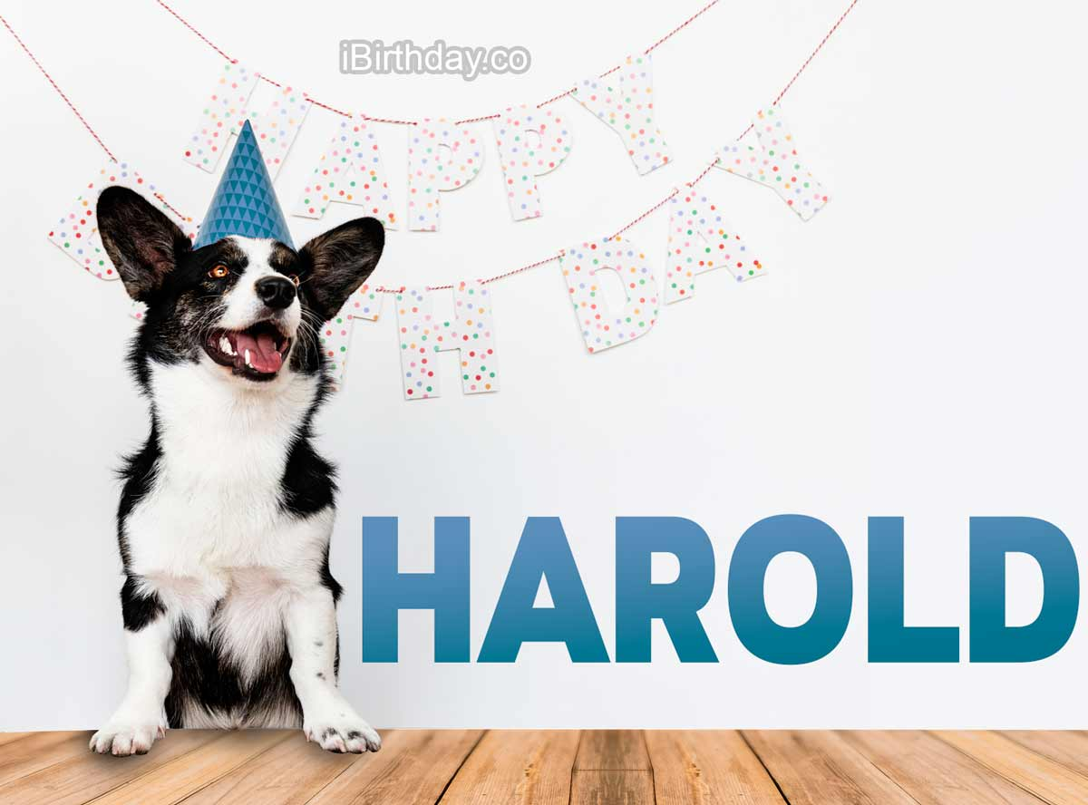 Harold Dog Birthday Meme