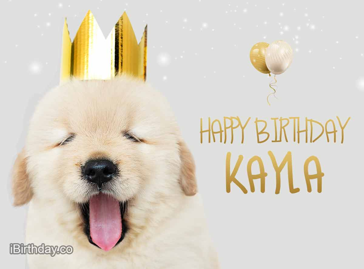 Kayla Dog Birthday Meme