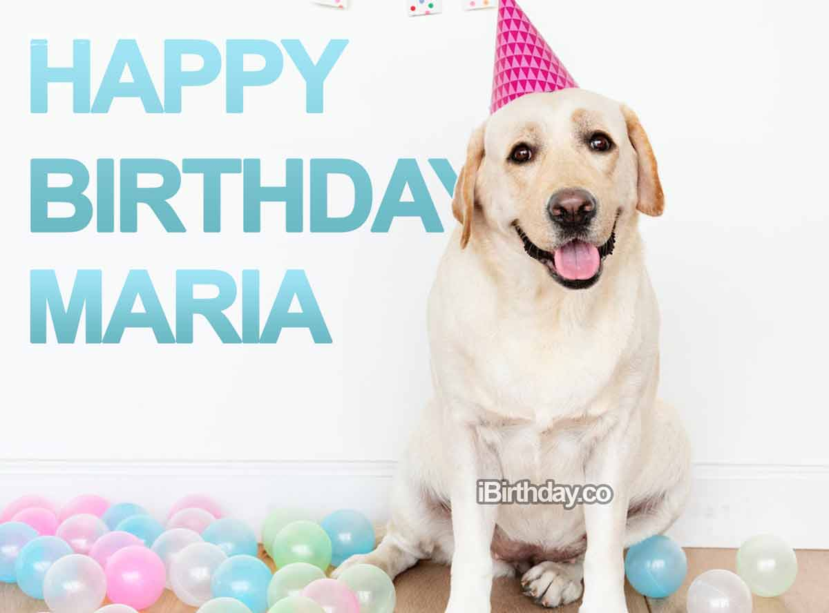 Maria Dog Birthday Meme