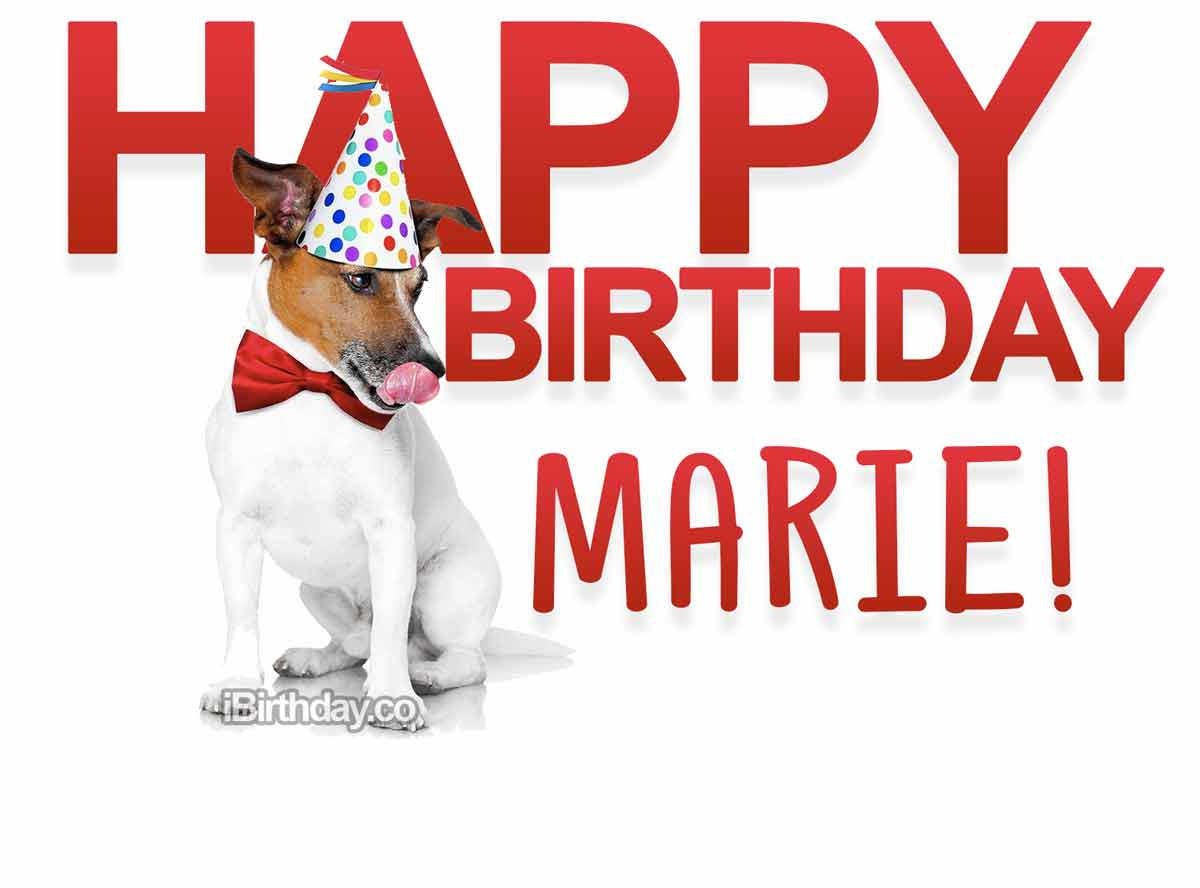 Marie Dog Birthday Meme