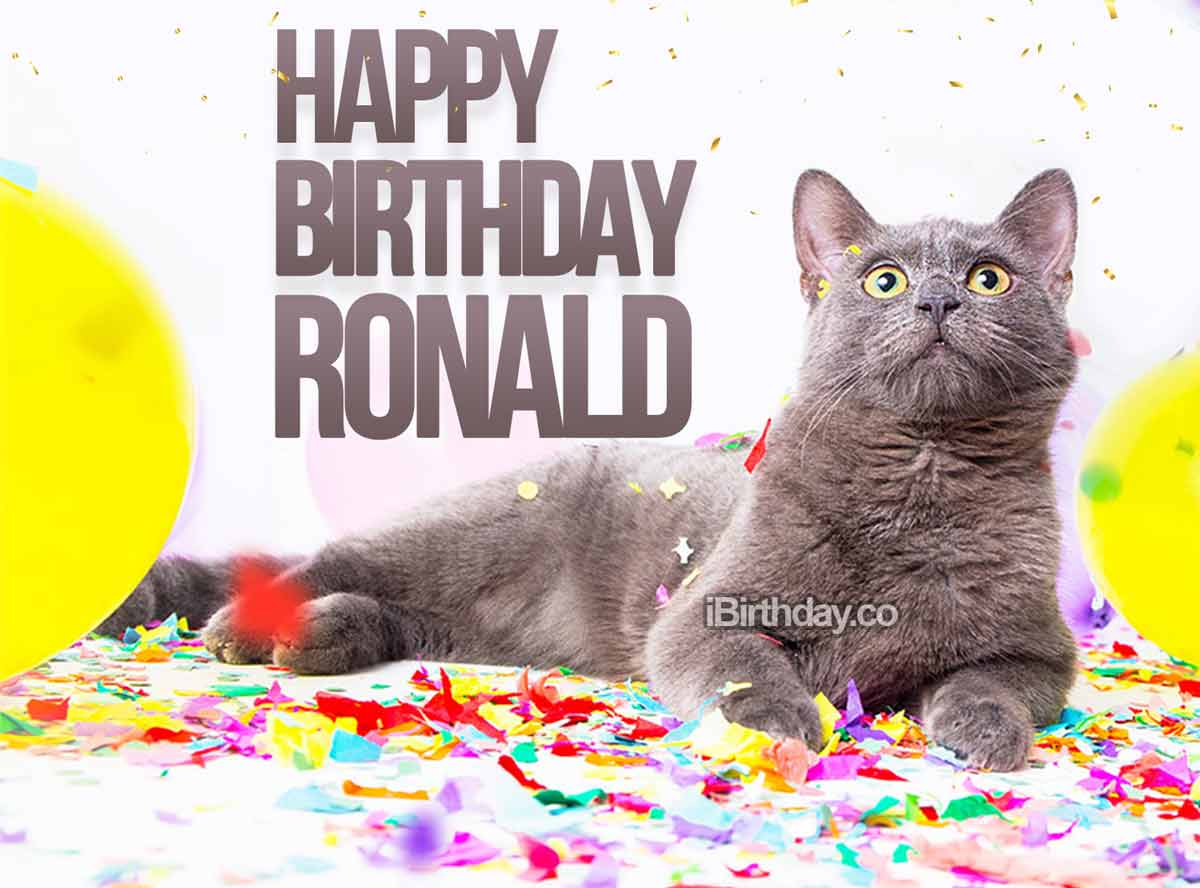 Ronald Cat Birthday Meme