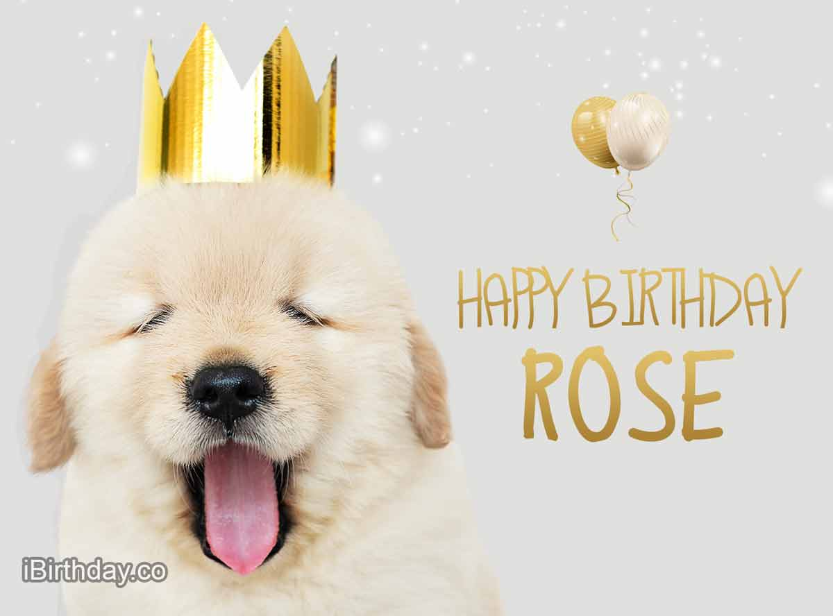 Rose Dog Birthday Meme
