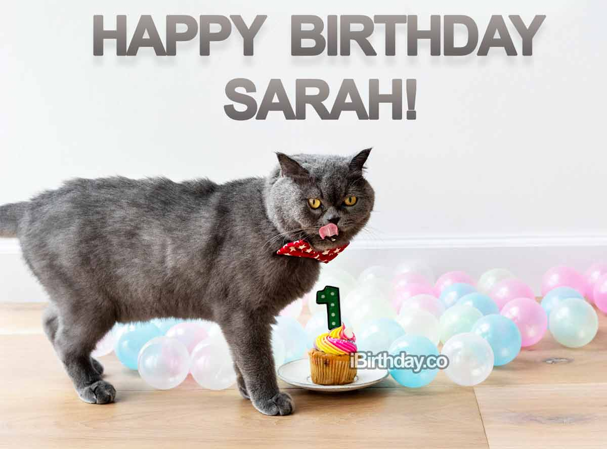 Sarah Cat Birthday Meme