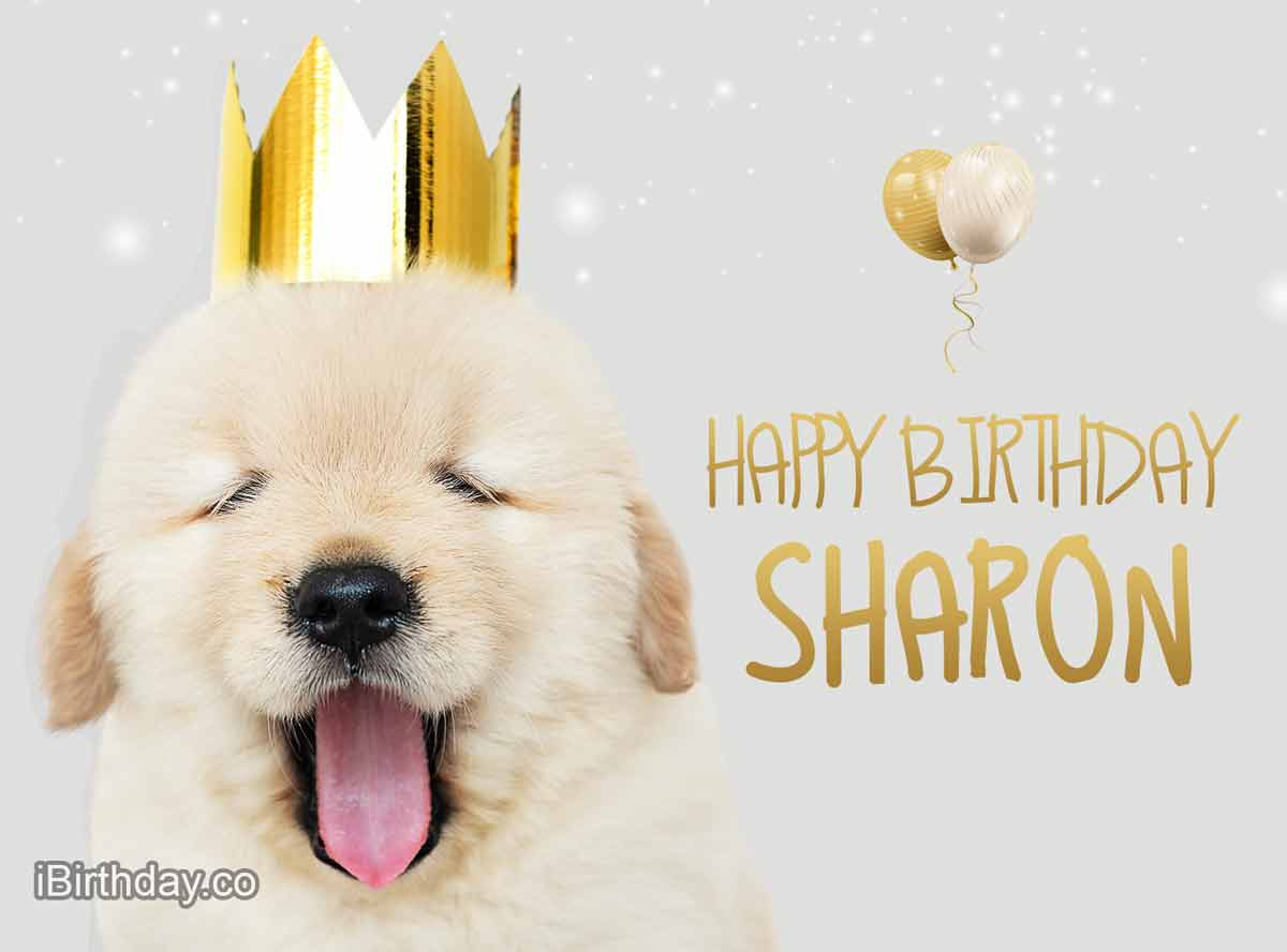 Sharon Dog Happy Birthday Wish