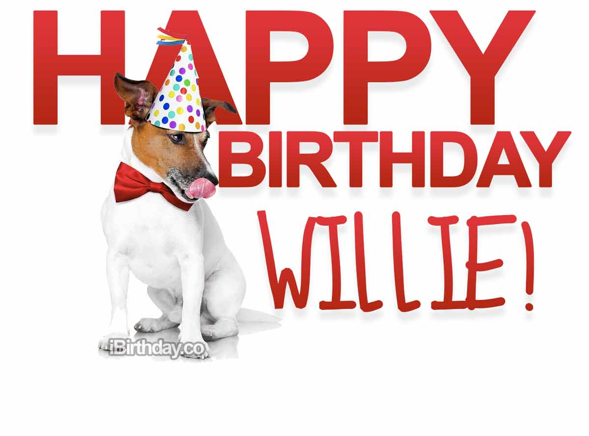Willie Dog Birthday Meme