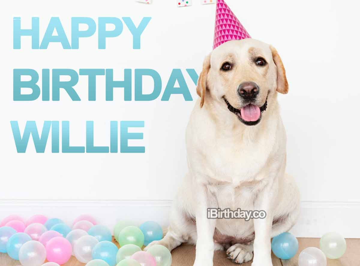 Willie Dog Birthday Wish