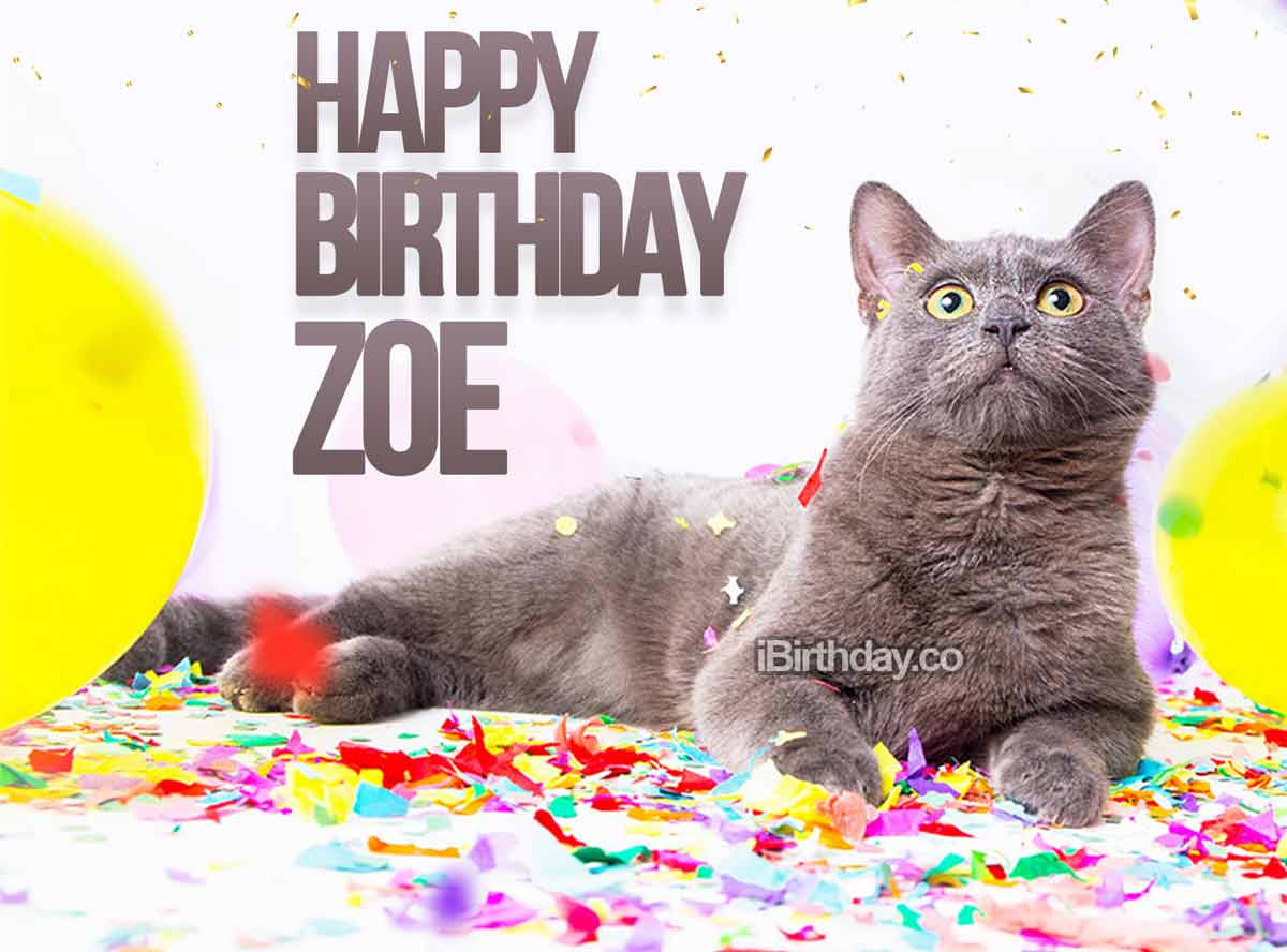 Zoe Birthday Cat Meme - Happy Birthday
