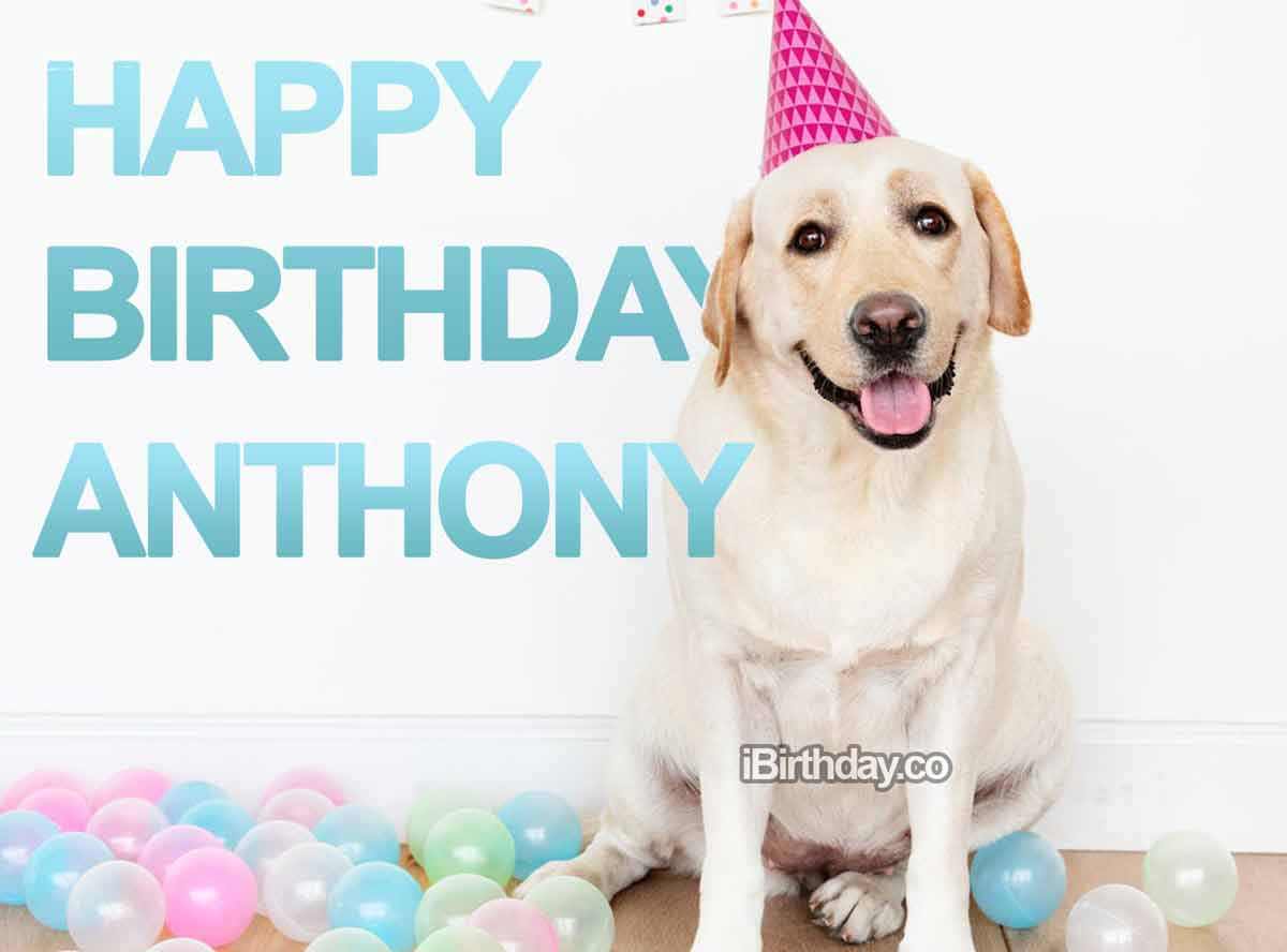 Anthony Dog Birthday Meme