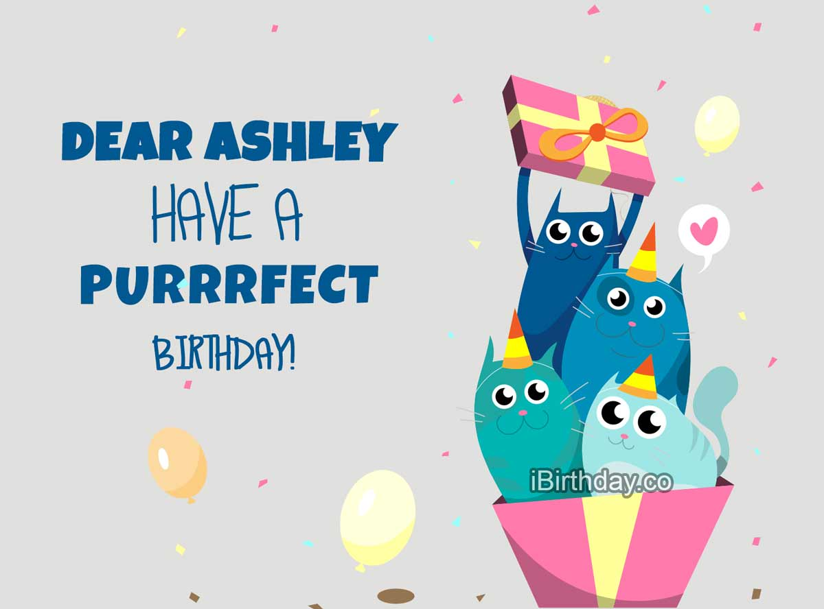 Ashley Cat Birthday Meme