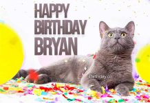 Bryan Cat Happy Birthday
