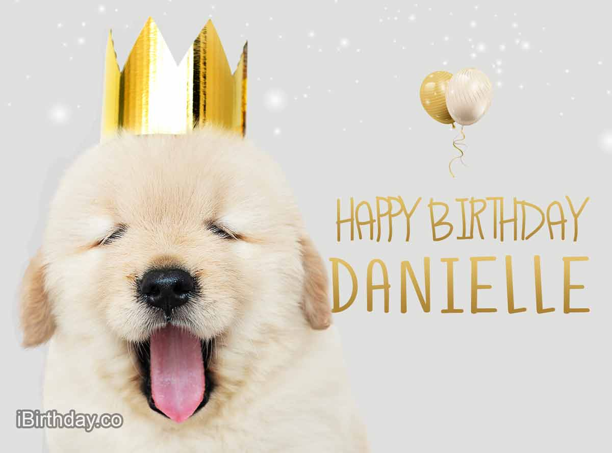 Danielle Dog Birthday Meme