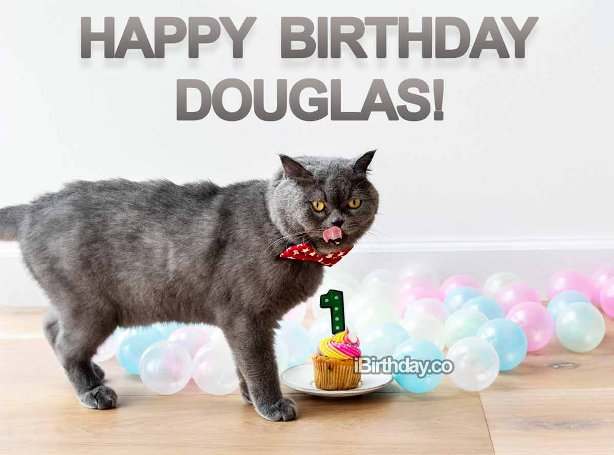 Douglas Cat Birthday Meme