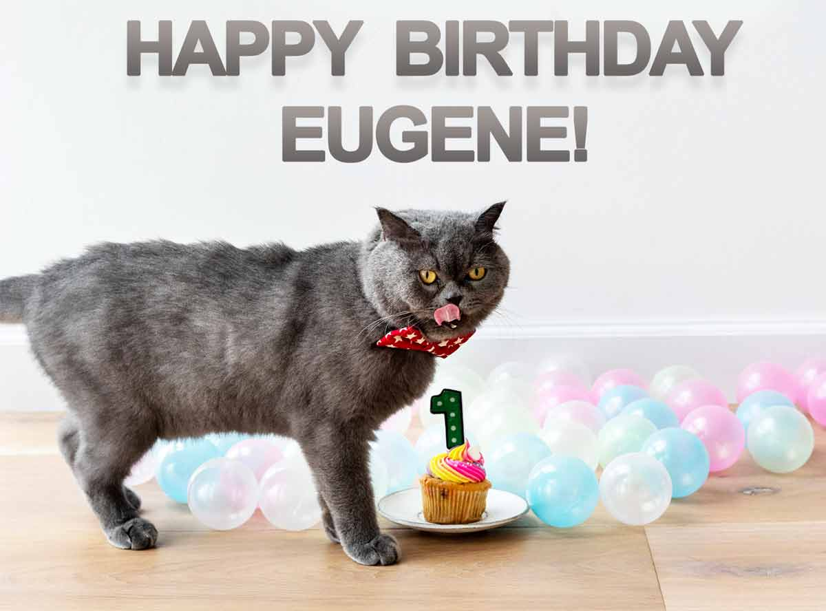 Eugene Cat Happy Birthday