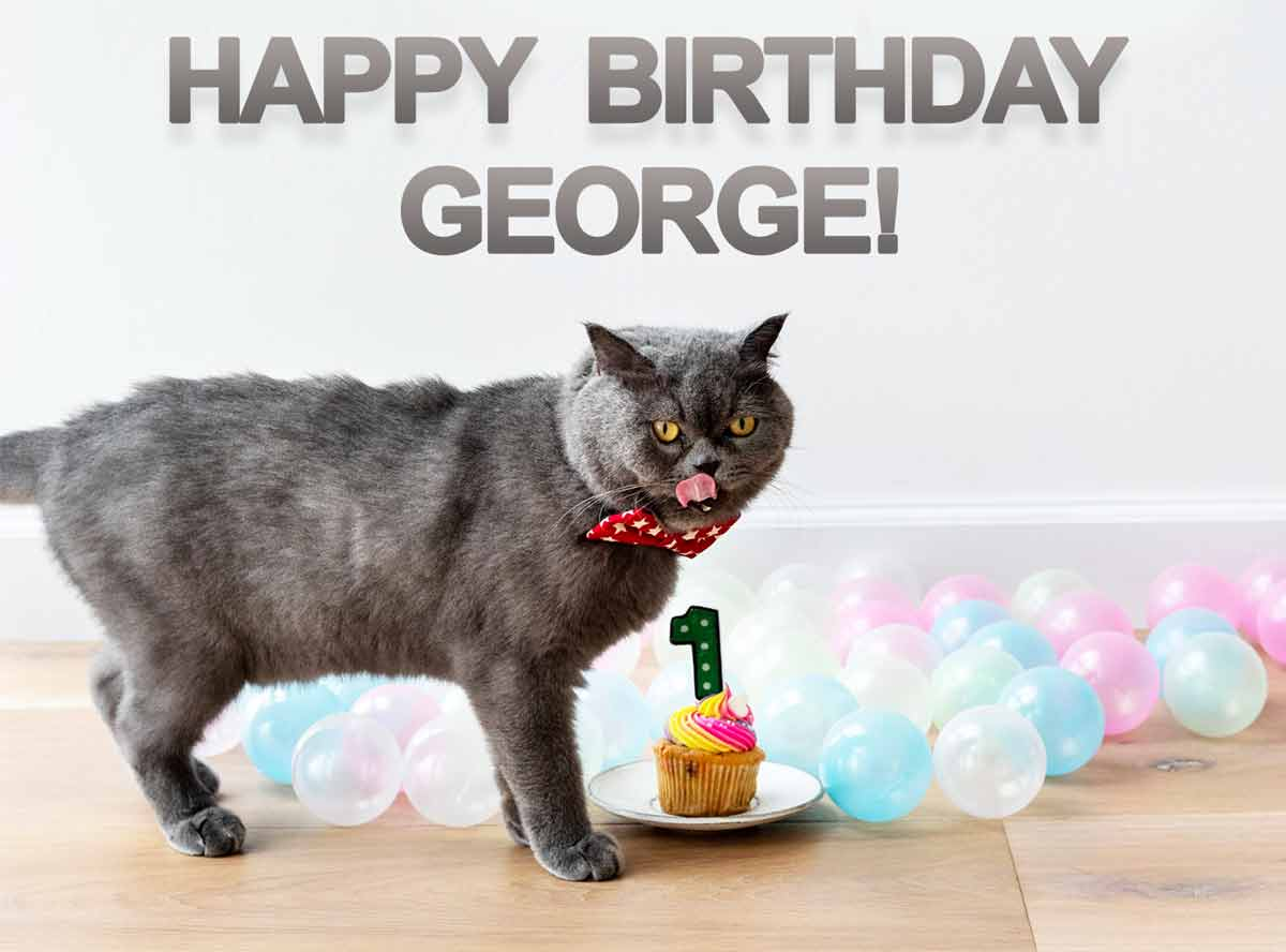 George Cat Birthday Meme