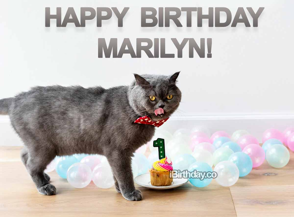 Marilyn Cat Happy Birthday